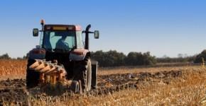 labour après la récolte du maïs
