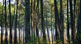 communes_forestieres