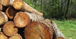tas de bois libre-de-droit138